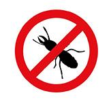dedetizadora em londrina - formiga