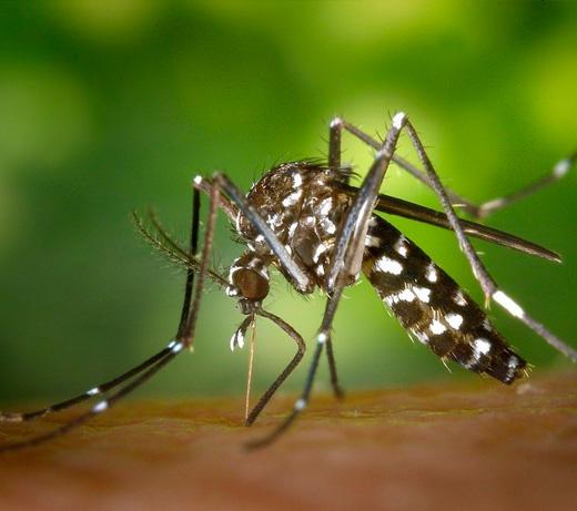 Controle Mosquito da Dengue