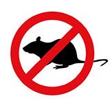 dedetizadora em londrina - rato